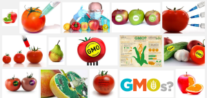 First page of Google image search results for 'GMO', accessed 22:46, 07/08/2015